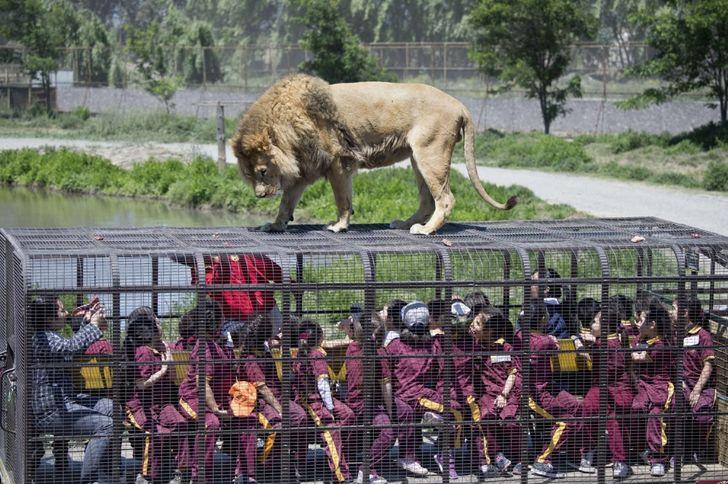 15примеров борьбы заправа животных, которые делают наш мир немного человечнее