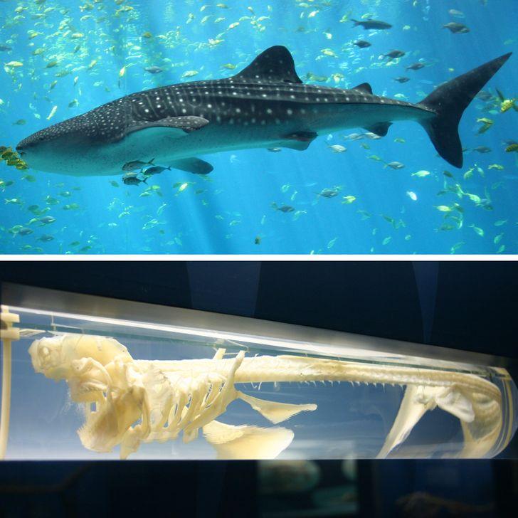 12 безумных фактов из животного мира, по которым можно написать самый захватывающий учебник биологии