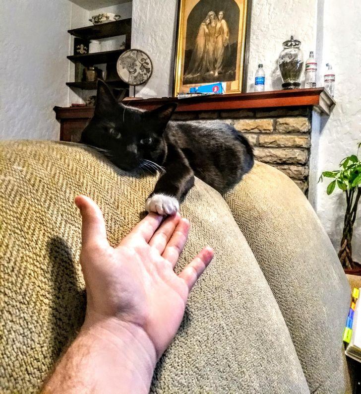 15+ фото, доказывающих, что коты тоже хорошие мальчики