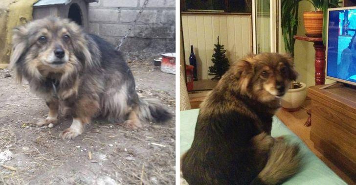 Читатели AdMe.ru рассказали о бездомных животных, которых они просто не смогли оставить в беде