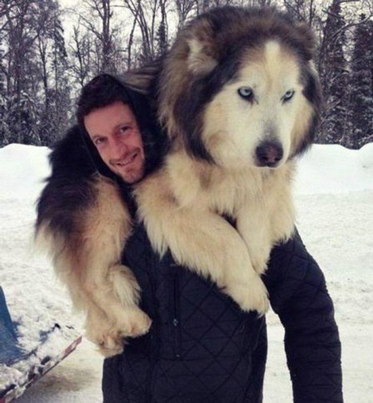 10пород собак для тех, кто всегда мечтал освоем личном медвежонке (Найдутся варианты идля семей сдетьми)