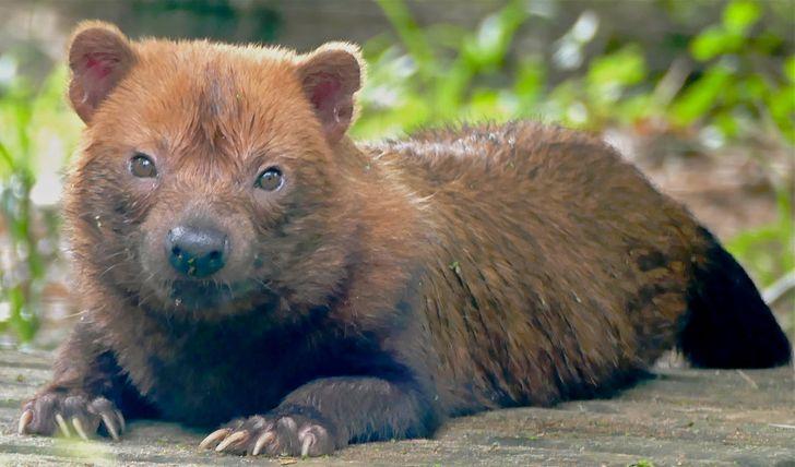17 животных, над которыми природа долго не фантазировала, а просто создала их по чужому подобию