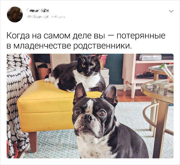 20+ раз, когда кошки с собаками наплевали на предрассудки и стали лучшими друзьями
