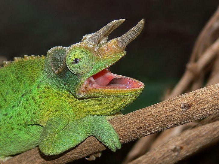 10+ эксцентричных животных, создавая которых природа пустилась во все тяжкие