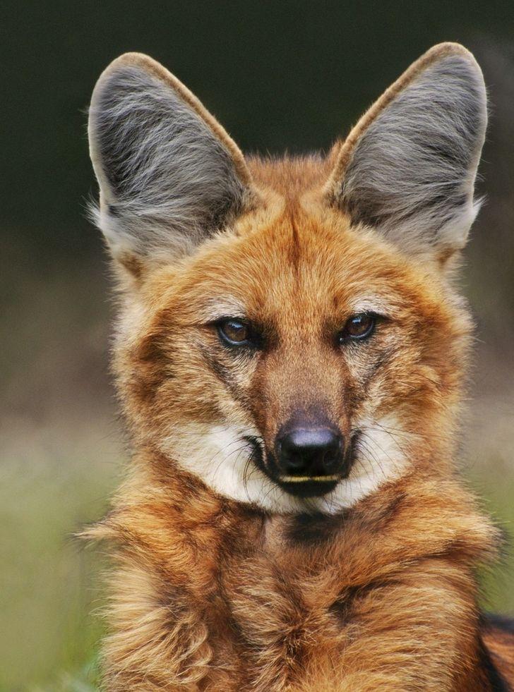 20«самозванцев» среди животных, которые любого собьют столку своим внешним видом