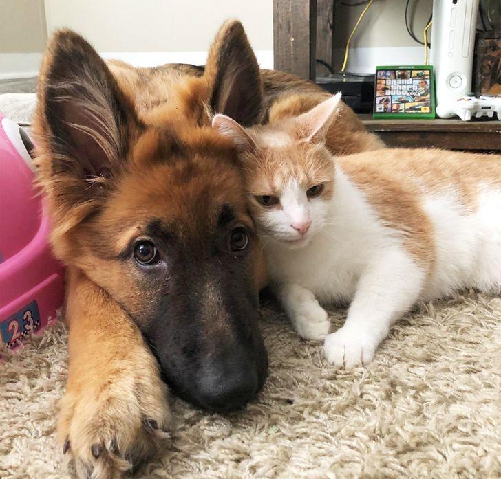 20+ доказательств того, что между кошками и собаками уже давно нет никакой вражды