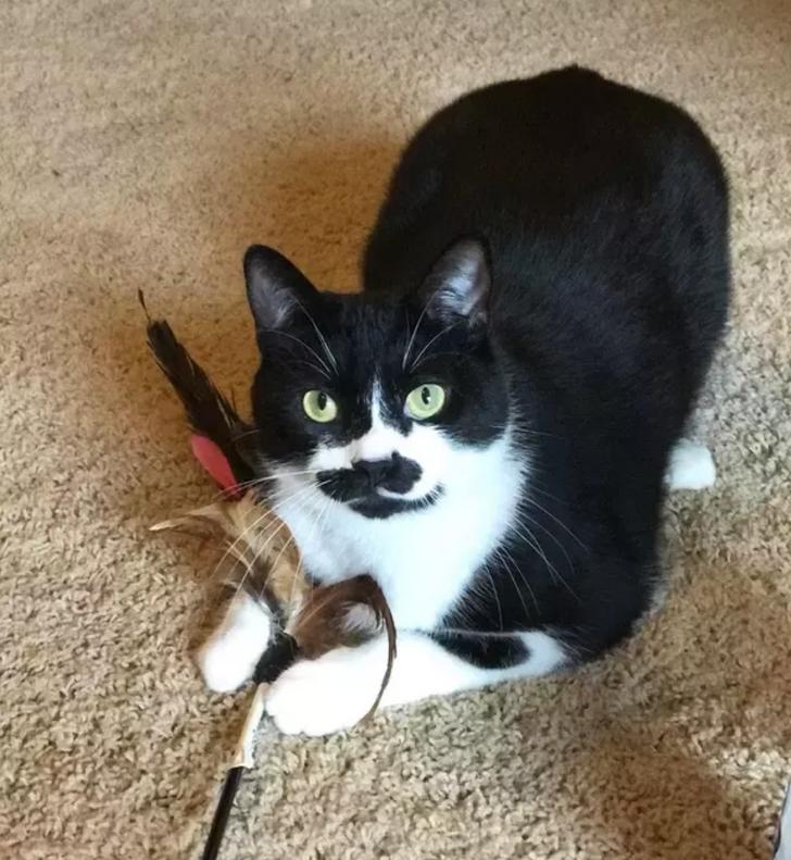 Портрет маленького котенка на черном фоне. Котенку 1 месяц. Кот ... | 791x728