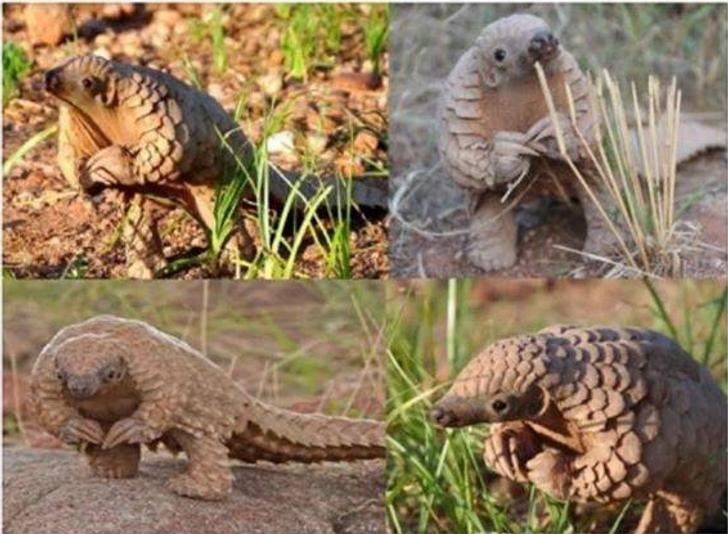 27крутых фотографий животных, которые подняли всем настроение в2017 году