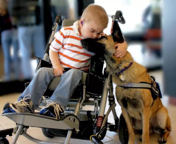 15+ собак с чистым сердцем, которые знают, как сделать этот мир лучше